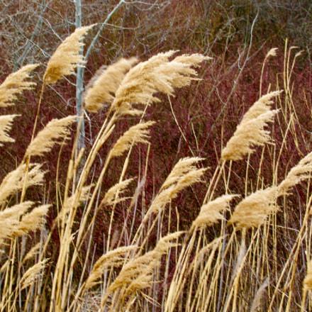 Wild Okanagan grass
