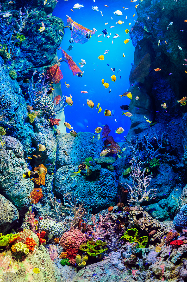 Photograph The Aquarium by Cheeyong Goh on 500px