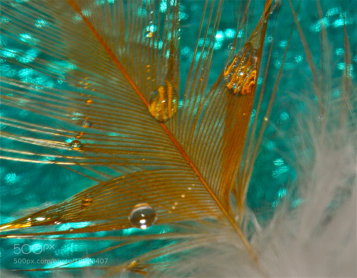 Photograph Feather blues by Michael Adcock on 500px