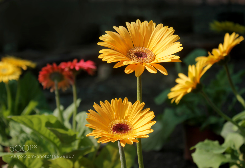 Photograph Sunshine by Subhash Masih on 500px