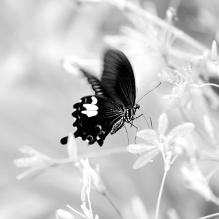 Butterfly in spring, Canon EOS-1D X, Canon EF 100-400mm f/4.5-5.6L IS