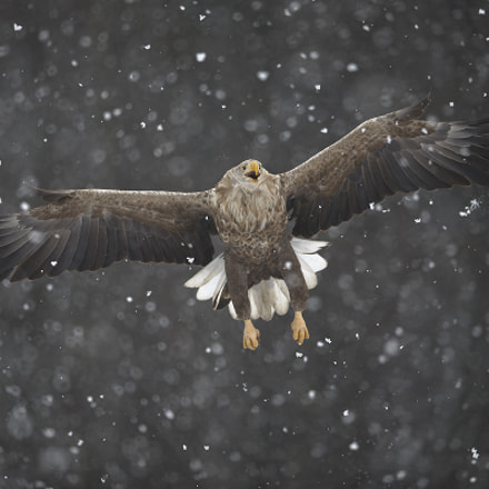Through the blizzard, Canon EOS-1D X, Canon EF 400mm f/2.8L IS II USM