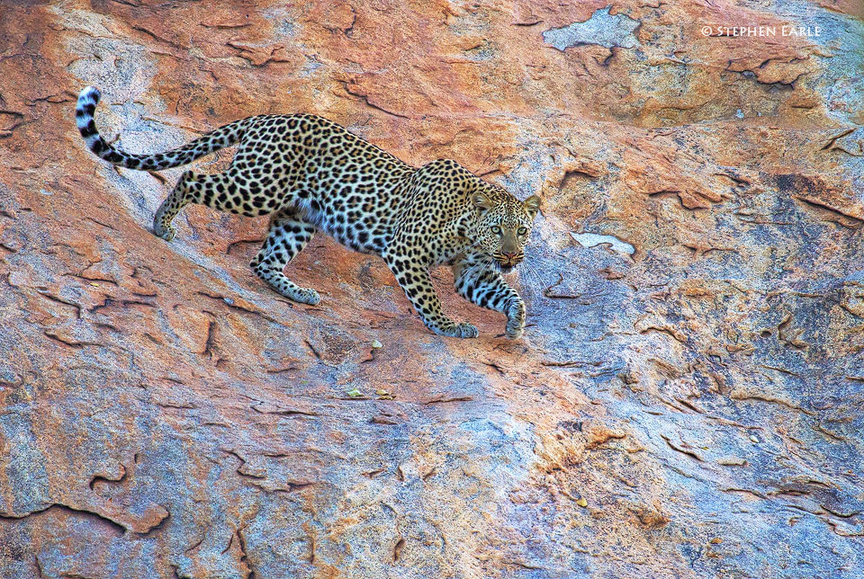 Photograph Leopard Rock by Stephen Earle on 500px