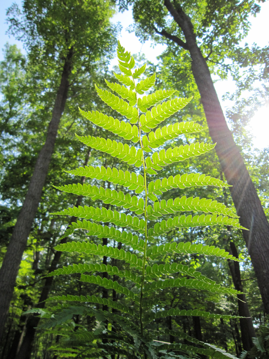 Photograph Fern by Ron Lovelace on 500px