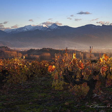 Sunset in the vineyards, Canon EOS 5D, Tamron SP AF 28-75mm f/2.8 XR Di LD Aspherical [IF] Macro