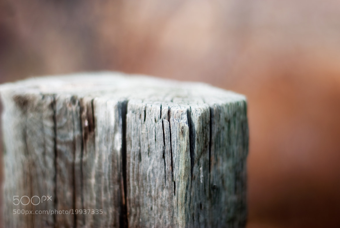 Photograph Fence Post by Katie Kirkland on 500px