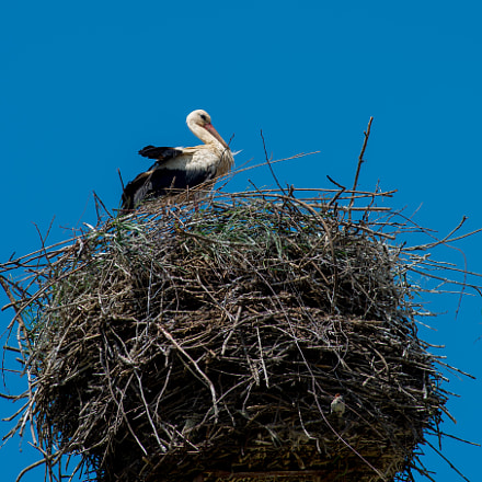 Storchennest, Nikon D800, AF Nikkor 180mm f/2.8D IF-ED