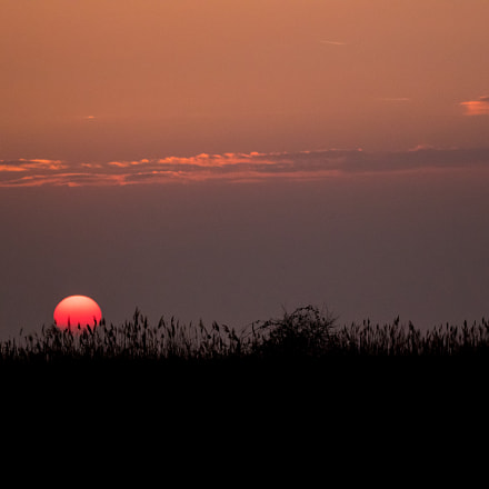 sunset, Canon EOS 7D MARK II, Sigma 150-600mm f/5-6.3 DG OS HSM | C