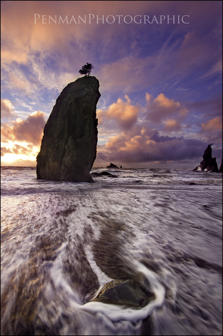 Photograph Standing tall. by Dustin Penman on 500px