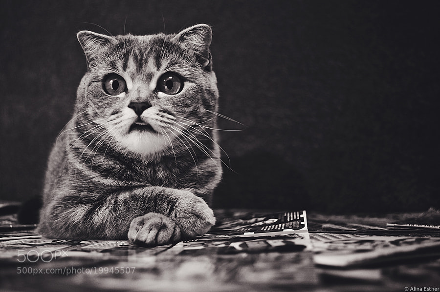 Photograph cat by Alina Esther