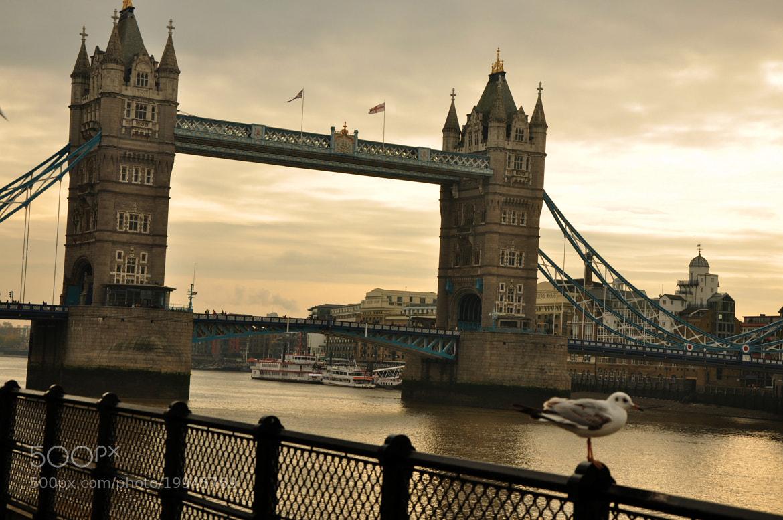 Photograph London Bridge by Shaun Fernandes on 500px