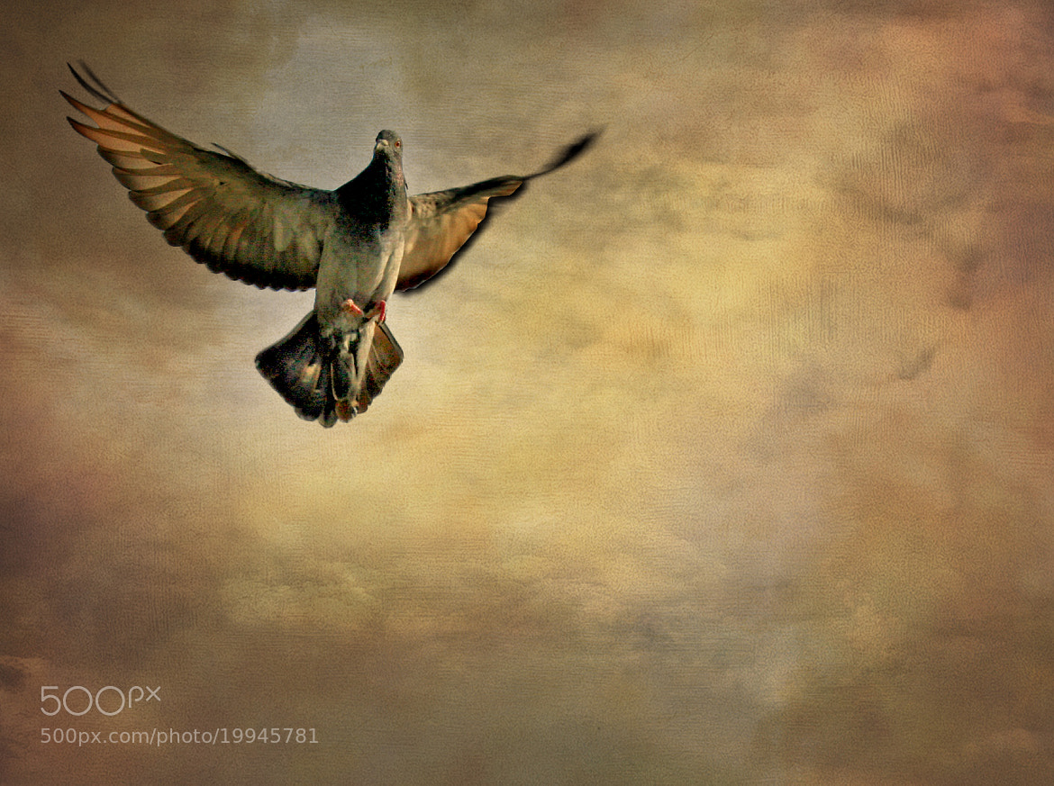Photograph In the name of peace by Duilio Pianelli on 500px