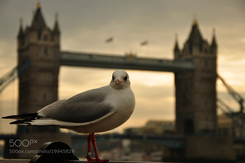 Photograph London Bridge - A Birds Eye View by Shaun Fernandes on 500px
