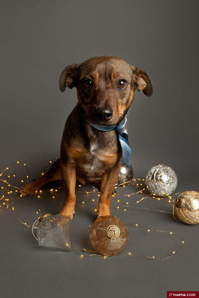 Photograph Dog Holiday Photo by Kira Stackhouse on 500px