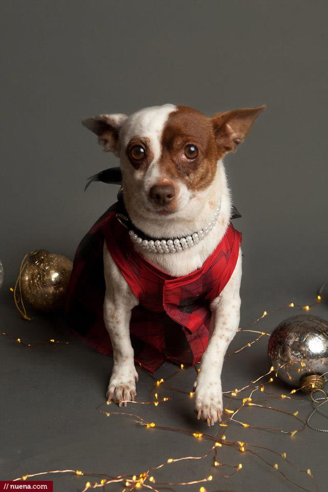 Photograph Holiday Dog Photos by Kira Stackhouse on 500px