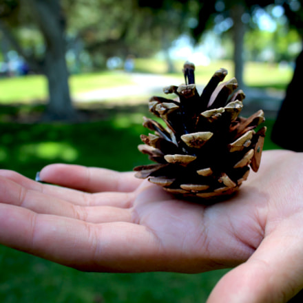 Pine Cone Hand, Canon EOS REBEL T5, Canon EF-S 18-55mm f/3.5-5.6 IS