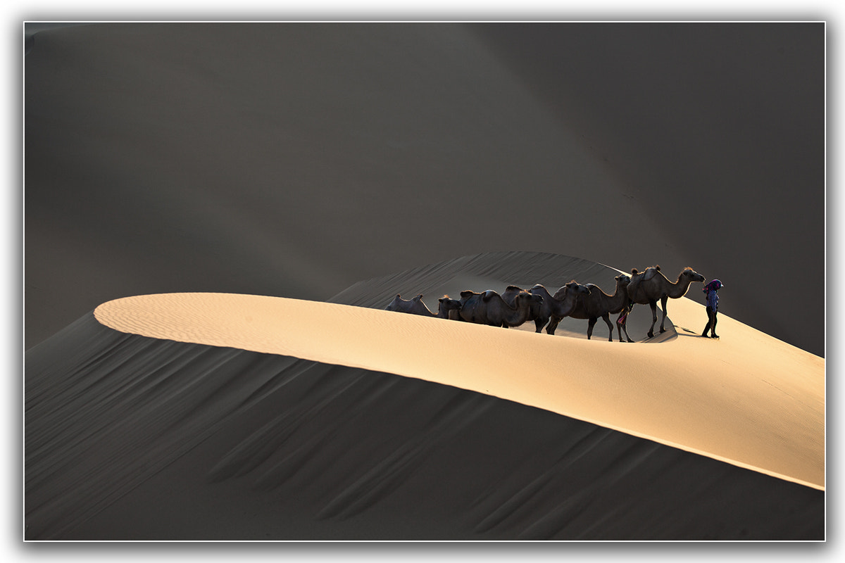 Photograph MORNING LIGHT IN THE DESERT by Shin YongSang on 500px