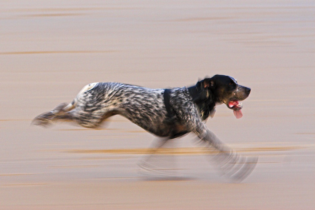 Photograph Run baby, run by Javier Abad on 500px