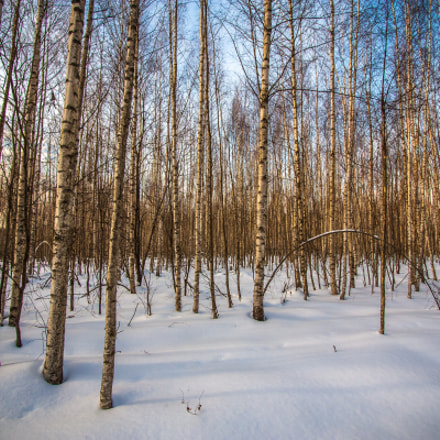 Winter forest, Canon EOS 450D, Canon EF-S 10-22mm f/3.5-4.5 USM