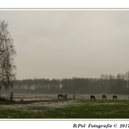 A Misty Morning, Canon POWERSHOT A590 IS
