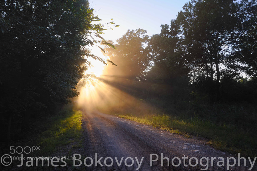 Late afternoon sun streams through the dust and trees on the backroads of southern Oklahoma.