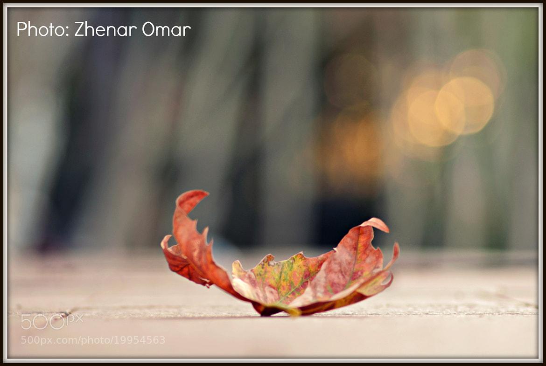 Photograph autumn by Zhenar Omar on 500px