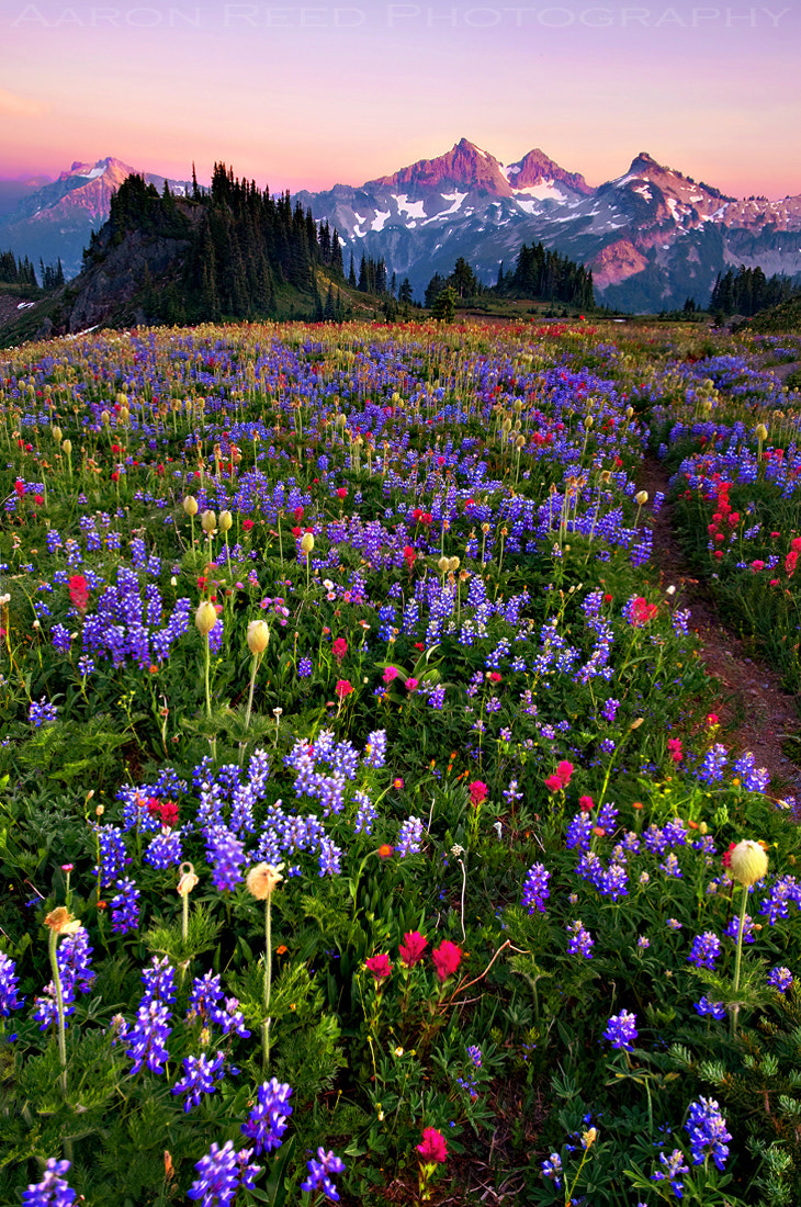 Photograph Field Of Dreams by Aaron Reed on 500px