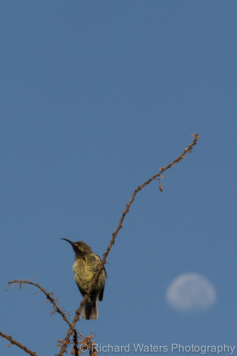 Photograph Bird and Moon... by Richard Waters on 500px
