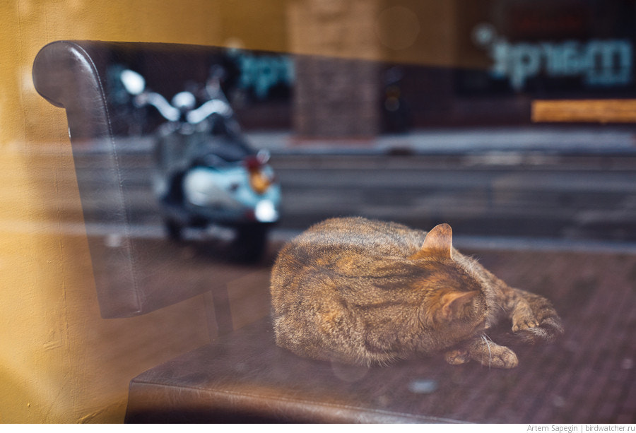 Photograph Cat Sleeping in a Cafe by Artem Sapegin on 500px