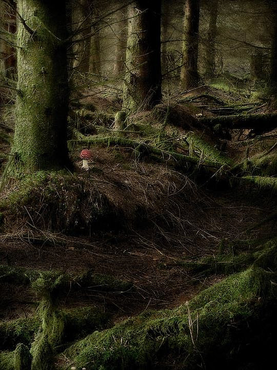 Photograph forest by stuart kerr on 500px