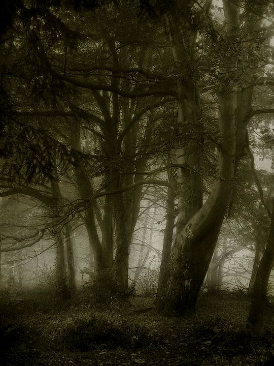 Photograph trees in fog by stuart kerr on 500px