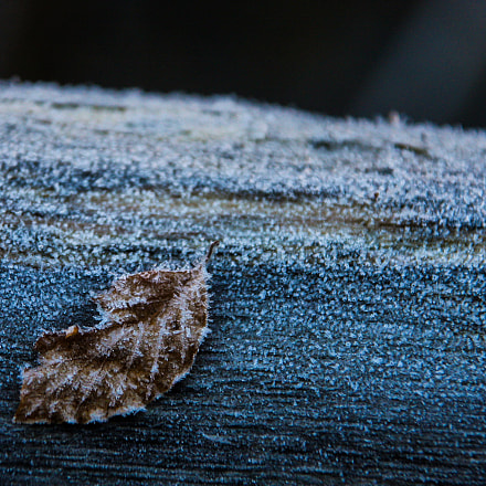 Leaf in the frost, Canon EOS 40D