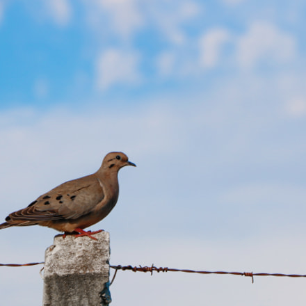 Free as a bird, Canon EOS REBEL T6S, Canon EF-S 18-135mm f/3.5-5.6 IS STM
