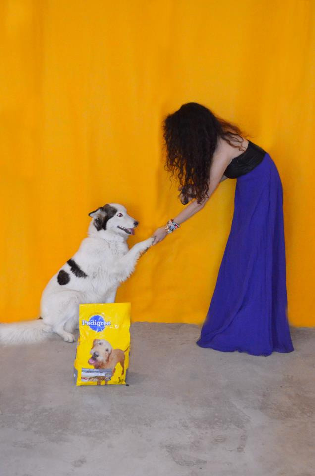 """Photograph """"Publicity for Pedigree"""" by Mariana Ricaño on 500px"""