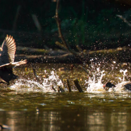 Run, Canon EOS 6D, Canon EF 100-400mm f/4.5-5.6L IS II USM