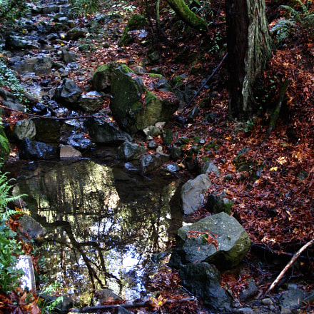 November creek, Mill Valley, Canon POWERSHOT SD870 IS