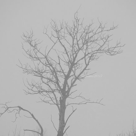 In the Fog, Fujifilm FinePix S2950