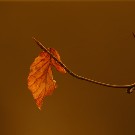 just one leaf, Canon EOS 6D, Sigma 150-600mm f/5-6.3 DG OS HSM | C