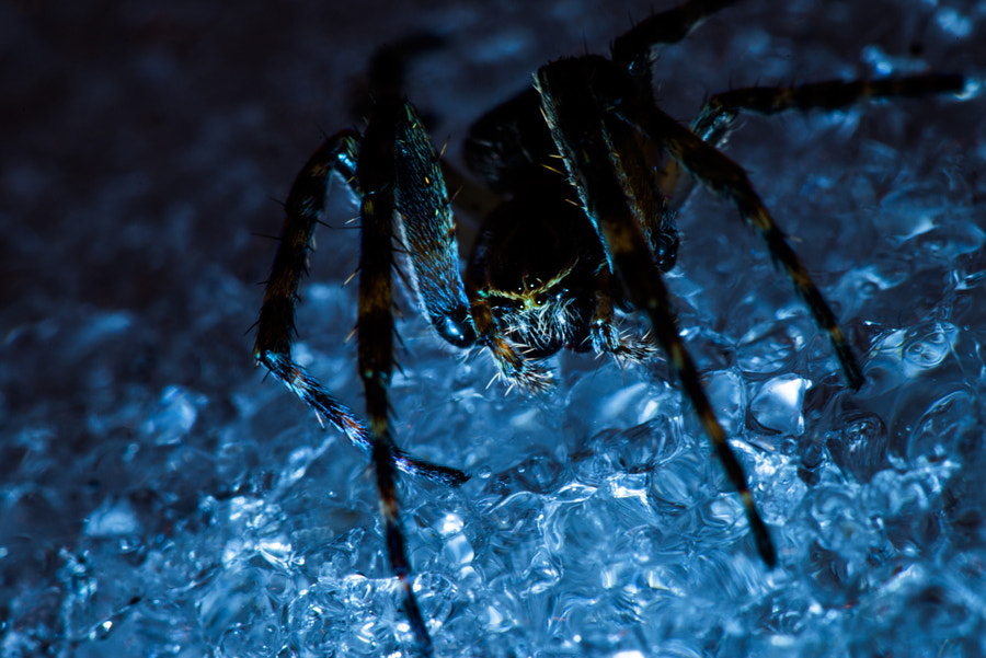 Photograph Ice Spider by Ben Hair on 500px