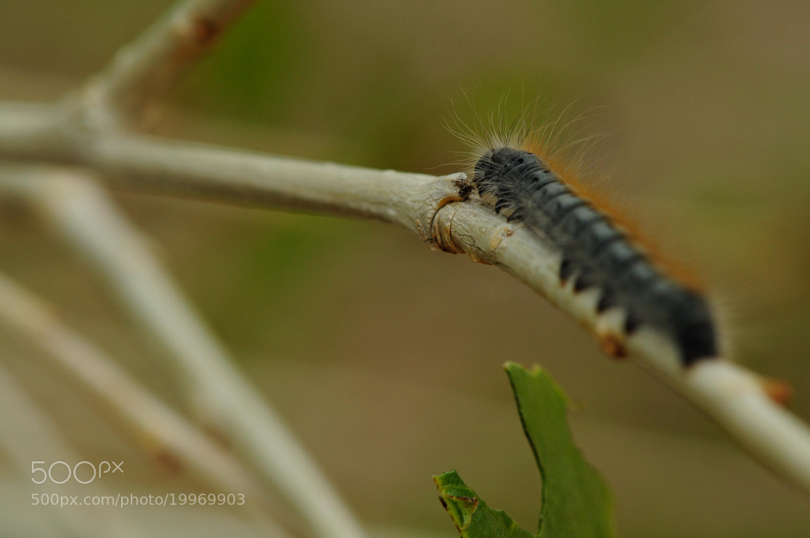 Photograph Caterpillar by N Simpson on 500px