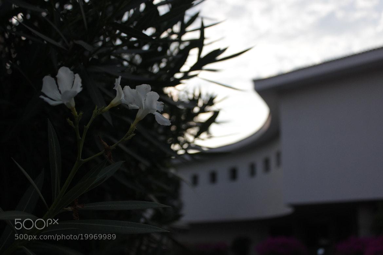 Photograph Las flores también atardecen. by Julia Hb on 500px