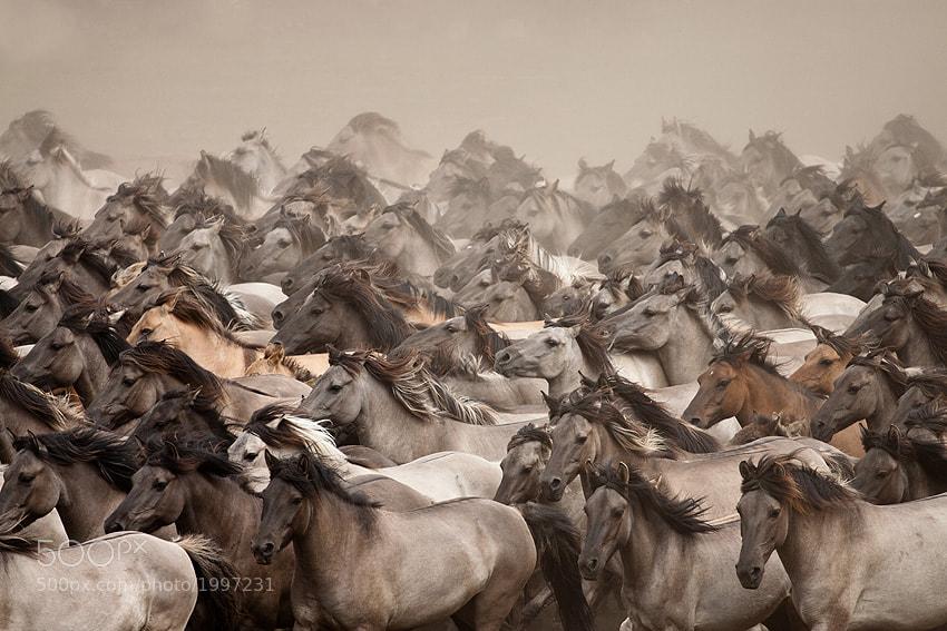 Photograph Wild Horses by Stefanie Lategahn on 500px