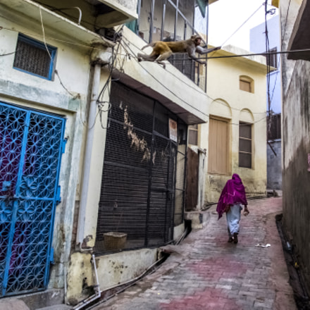 On the streets of Vrindavan