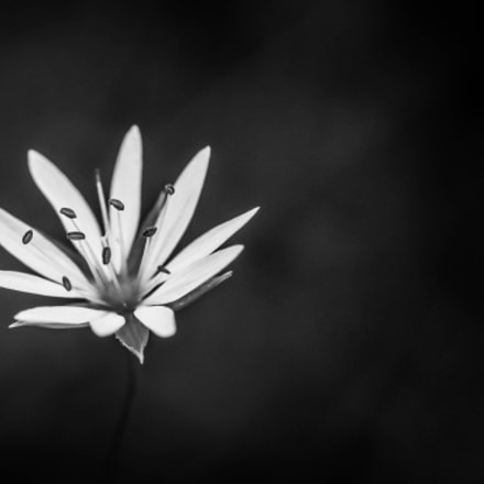 black and white, Canon EOS 70D, Canon EF-S 60mm f/2.8 Macro USM