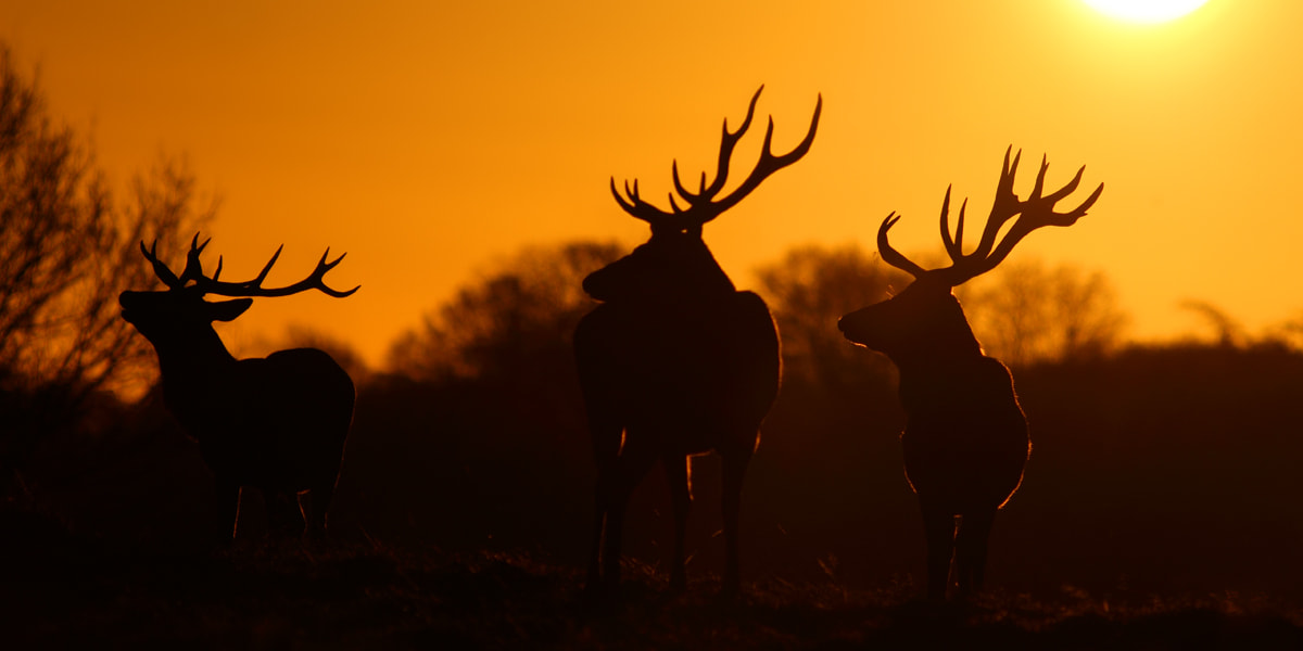 Photograph Three Kings by Simon Roy on 500px