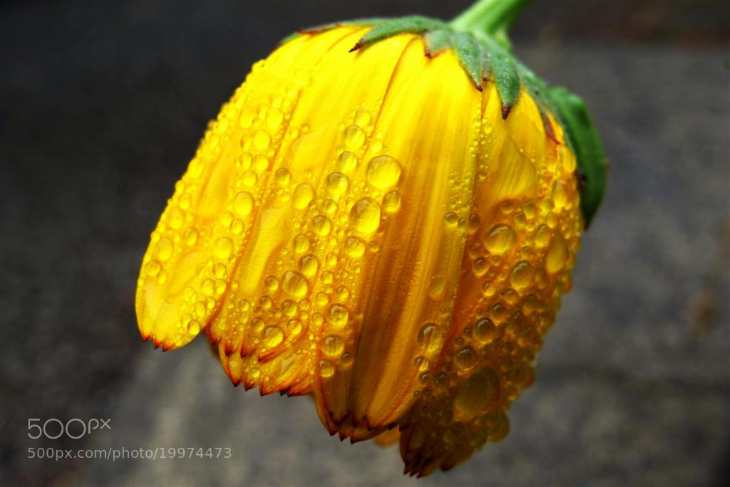 Photograph After the rain by Annie Japaud on 500px