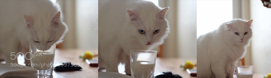 Photograph Your milk is the tasteless! by Julia Nikitina on 500px