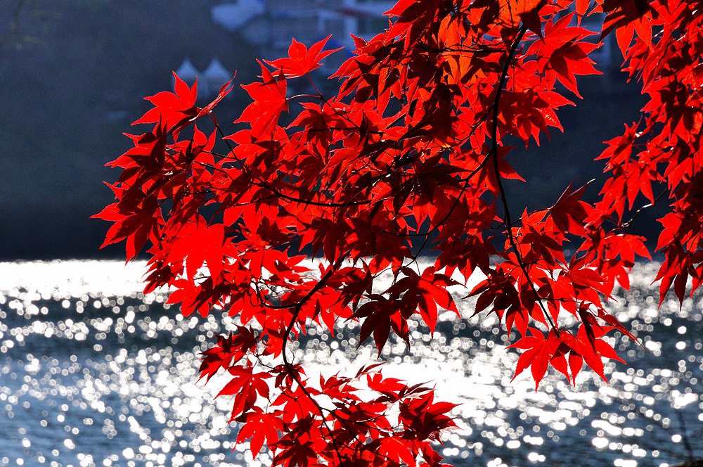Photograph Red leaf by Jumrus Leartcharoenyong on 500px