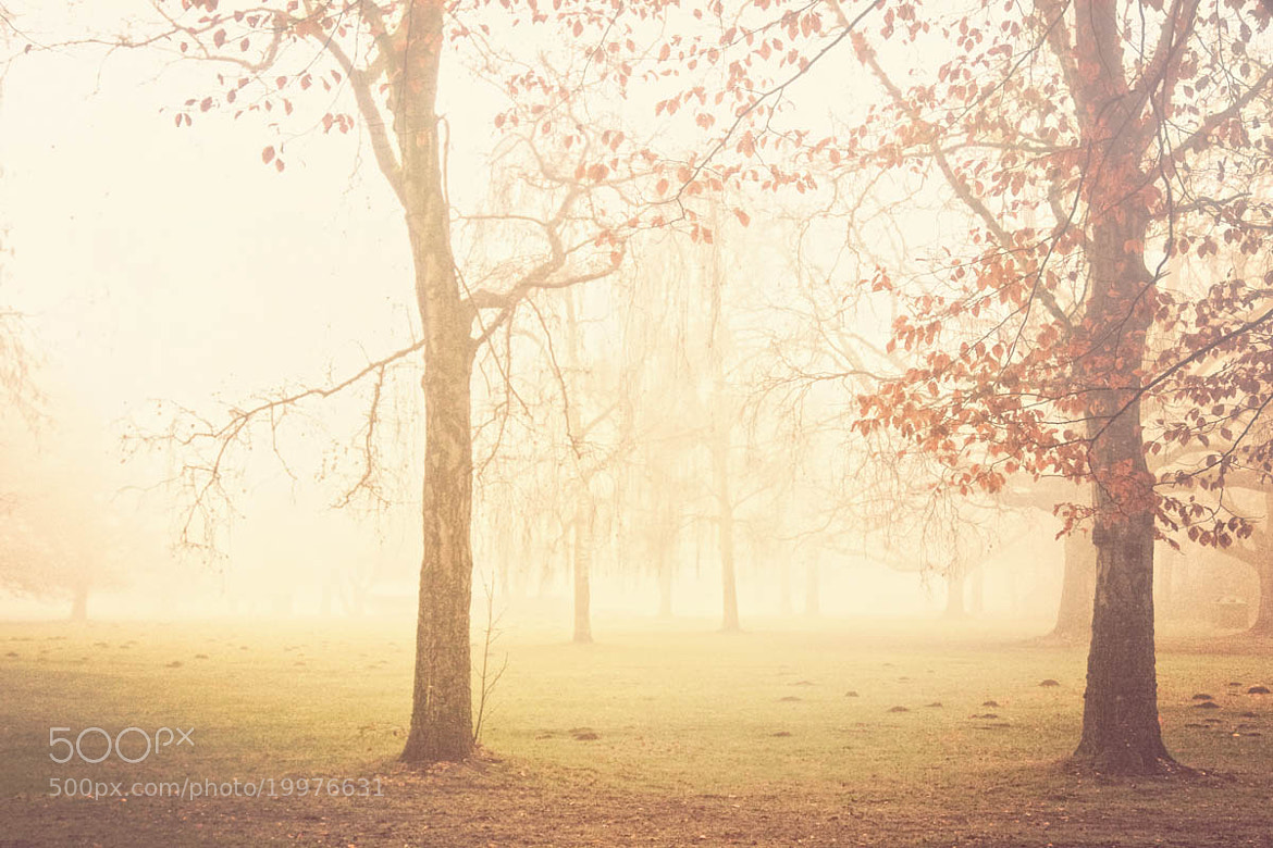 Photograph Magical mornings by Andrea Kamal on 500px