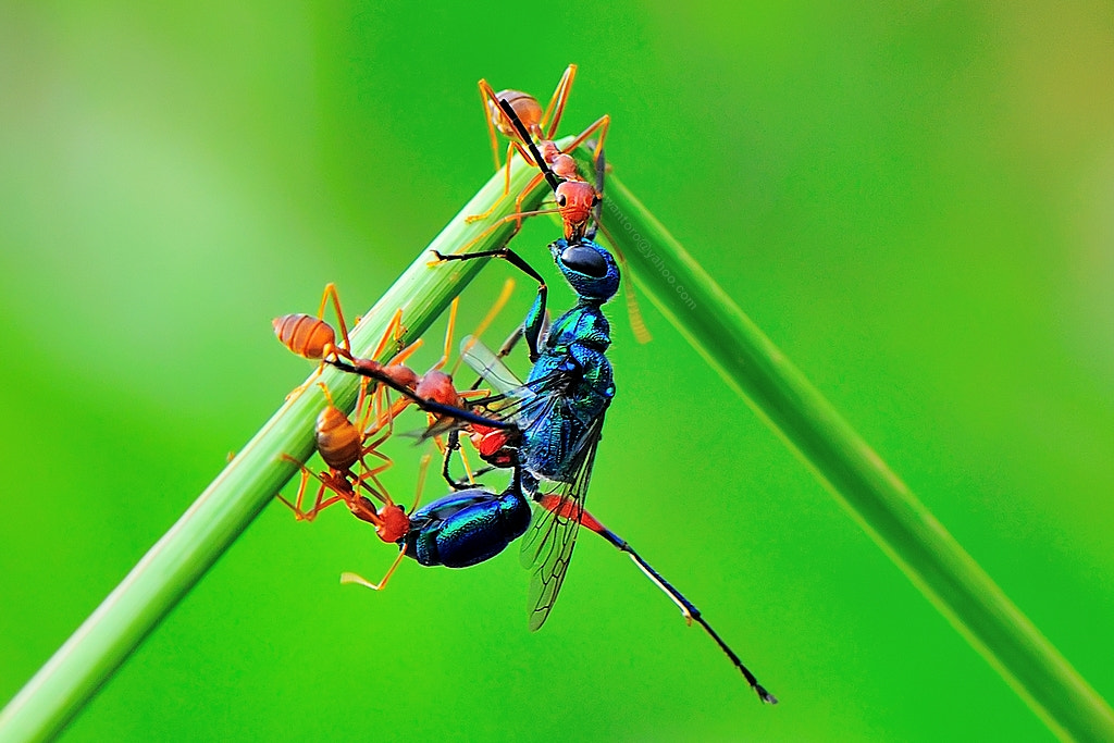 Photograph Lunch by Joko Nuswantoro on 500px